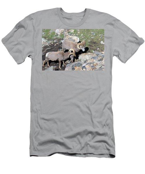 Colorado Rams Men's T-Shirt (Athletic Fit)