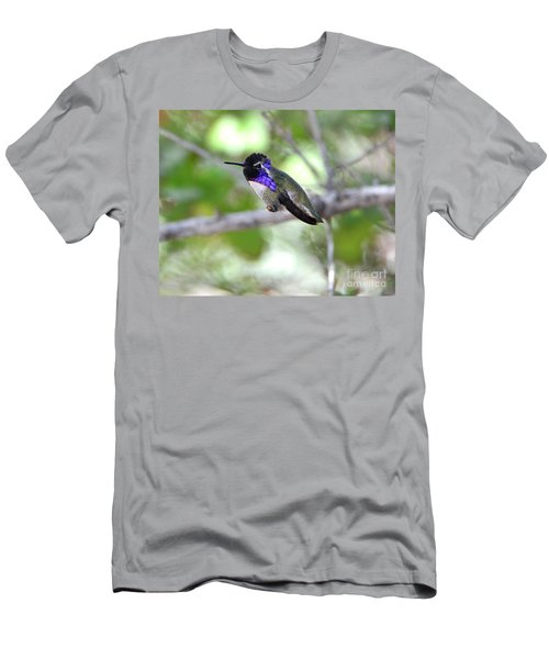 Costa's Hummingbird Men's T-Shirt (Athletic Fit)