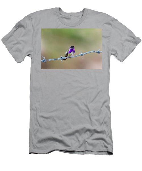 Costa's Hummingbird Men's T-Shirt (Athletic Fit)