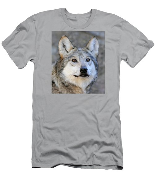 Curious Wolf Men's T-Shirt (Slim Fit) by Elaine Malott