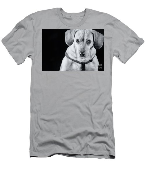Dachshund Lab Mix Men's T-Shirt (Athletic Fit)