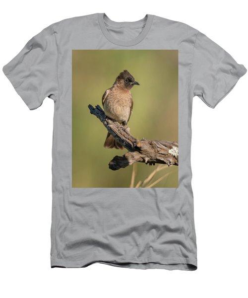 Dark-capped Bulbul Men's T-Shirt (Athletic Fit)
