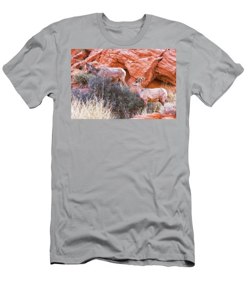 Desert Bighorn Sheep  Men's T-Shirt (Athletic Fit)