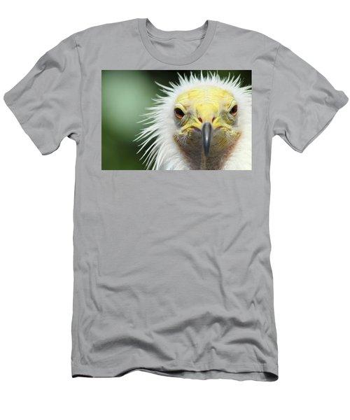 Egyptian Vulture Men's T-Shirt (Athletic Fit)