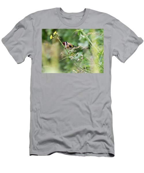 European Goldfinch Perched On Flower Stem B Men's T-Shirt (Athletic Fit)