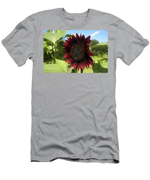 Evening Sun Sunflower #1 Men's T-Shirt (Slim Fit) by Jeff Severson