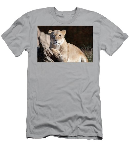 Fall Lioness Men's T-Shirt (Athletic Fit)