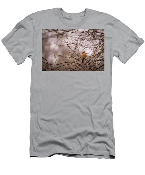Men's T-Shirt (Slim Fit) featuring the photograph Female Cardinal In Spring 2017 by Terry DeLuco