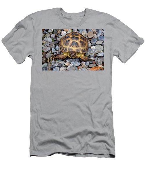 Female Russian Tortoise Men's T-Shirt (Athletic Fit)