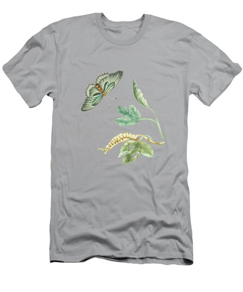 Fig Tree Branch With Caterpillar And Butterfly By Cornelis Markee 1763 Men's T-Shirt (Athletic Fit)