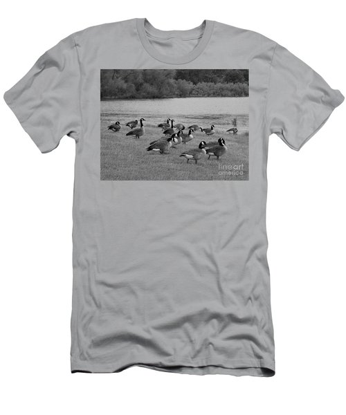 Flock Of Geese Men's T-Shirt (Athletic Fit)