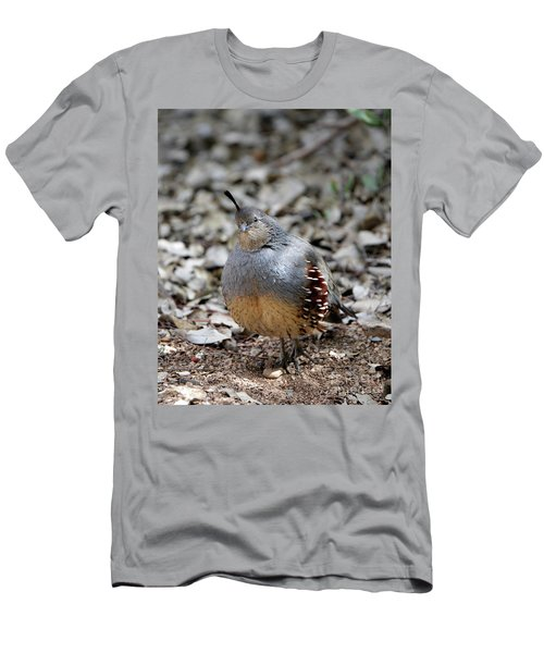 Gambel's Quail Men's T-Shirt (Athletic Fit)