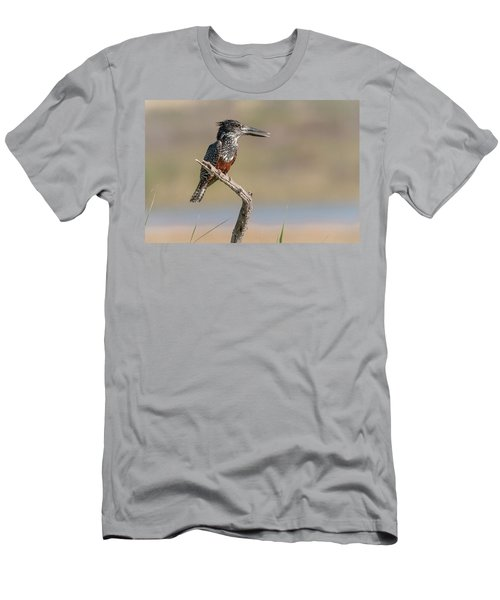 Giant Kingfisher Men's T-Shirt (Athletic Fit)