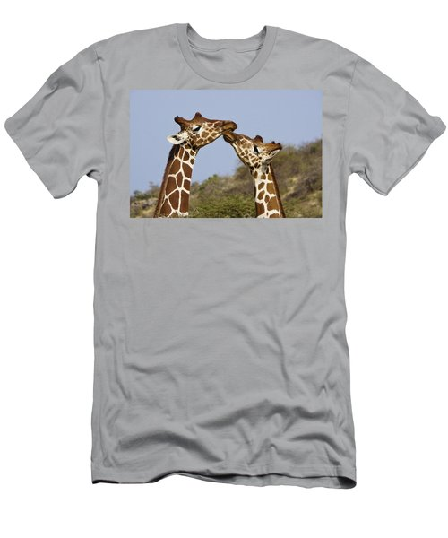 Giraffe Kisses Men's T-Shirt (Athletic Fit)