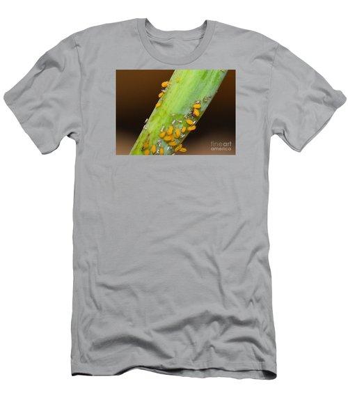 Golden Aphids Men's T-Shirt (Slim Fit) by Lew Davis