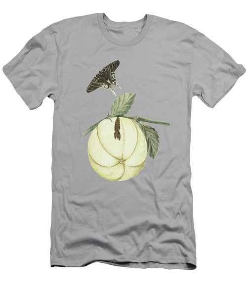 Grapefruit With Leaves Caterpillar And Butterfly By Cornelis Markee 1763 Men's T-Shirt (Athletic Fit)