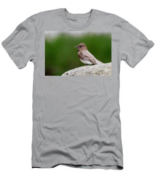 Black Phoebe Men's T-Shirt (Athletic Fit)
