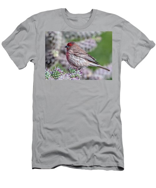House Finch Male Men's T-Shirt (Athletic Fit)