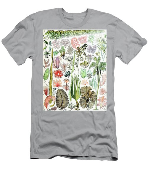 Illustration Of Algae And Seaweed  Men's T-Shirt (Athletic Fit)