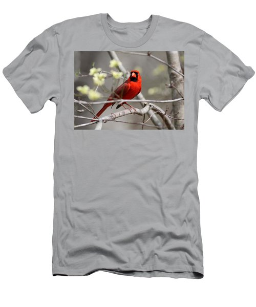 Img_2027-004 - Northern Cardinal Men's T-Shirt (Athletic Fit)