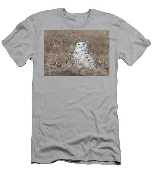 Last Year Of The Snowy Owls... Men's T-Shirt (Athletic Fit)