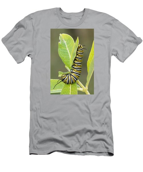 Late Season Monarch Men's T-Shirt (Athletic Fit)
