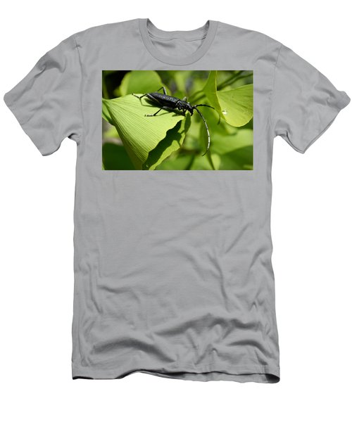 Little Beetle Men's T-Shirt (Athletic Fit)