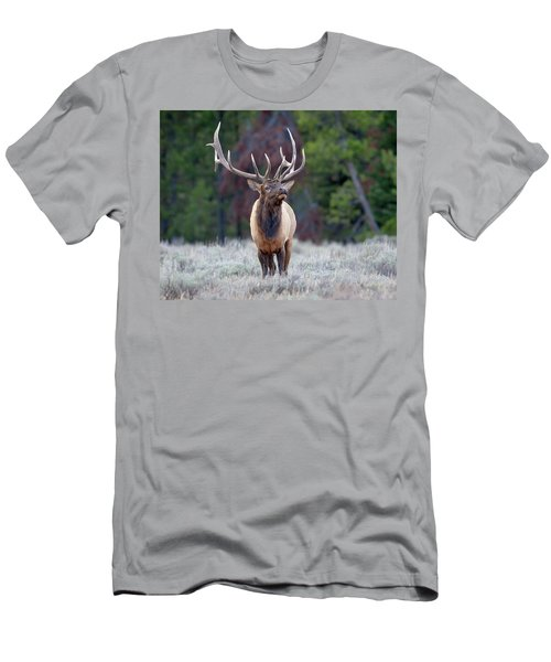 Majestic Bull Elk Men's T-Shirt (Slim Fit) by Jack Bell