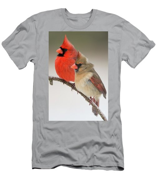 Male And Female Northern Cardinals On Pine Branch Men's T-Shirt (Athletic Fit)