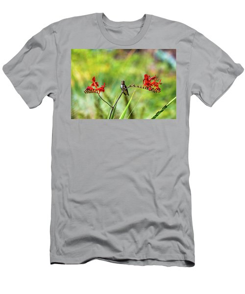 Male Young Hummingbird Perched Men's T-Shirt (Athletic Fit)