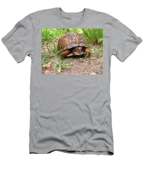 Maryland Box Turtle Men's T-Shirt (Athletic Fit)