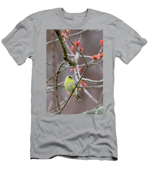 Men's T-Shirt (Slim Fit) featuring the photograph Molting Gold Finch by Bill Wakeley