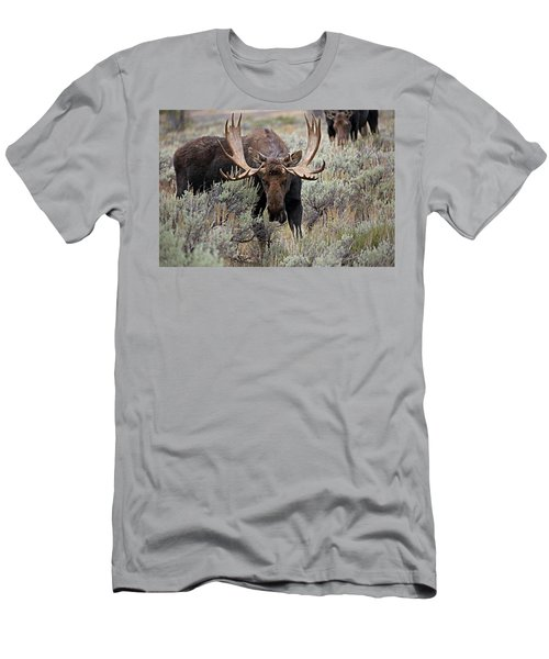 Moose In The Sage Men's T-Shirt (Athletic Fit)