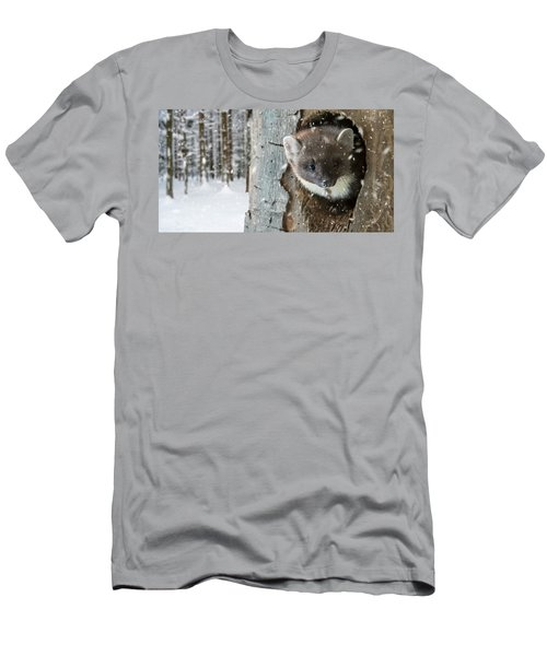 Pine Marten In Tree In Winter Men's T-Shirt (Athletic Fit)