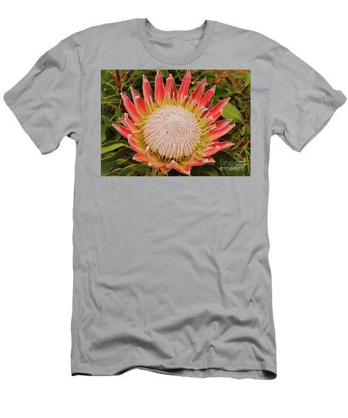 Protea I Men's T-Shirt (Slim Fit) by Cassandra Buckley