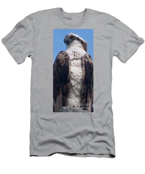 Proud Hawk Men's T-Shirt (Athletic Fit)