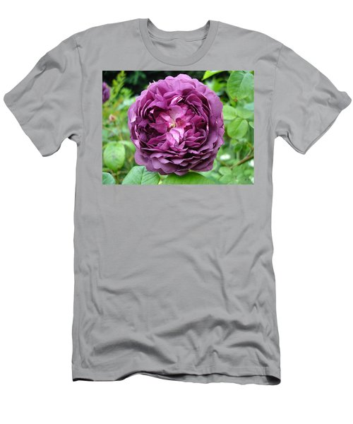 Purple English Rose Men's T-Shirt (Athletic Fit)