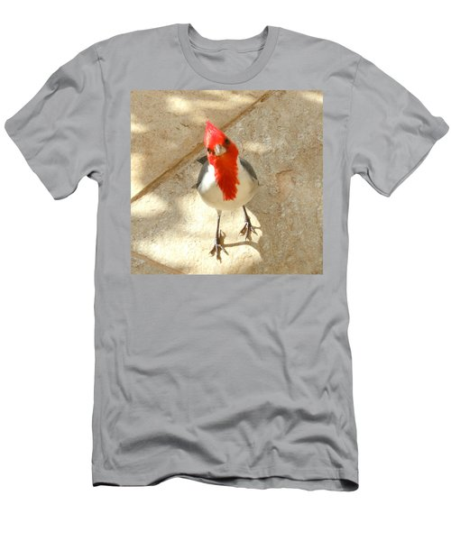 Red-crested Cardinal At My Feet Men's T-Shirt (Athletic Fit)