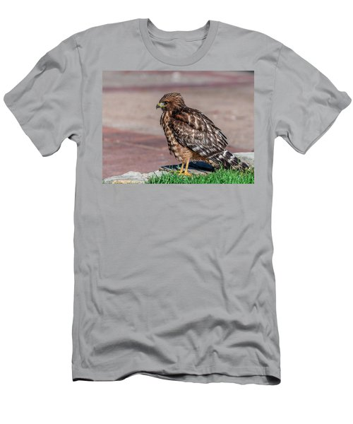 Red-shouldered Hawk Men's T-Shirt (Slim Fit) by Martina Thompson