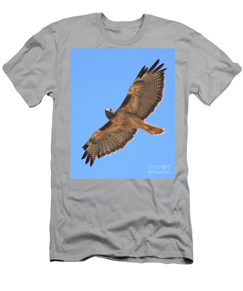 Red Tailed Hawk In Flight Men's T-Shirt (Athletic Fit)