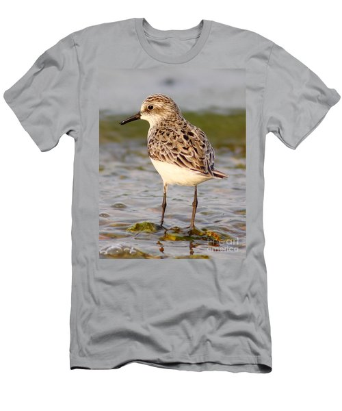 Sandpiper Portrait Men's T-Shirt (Athletic Fit)