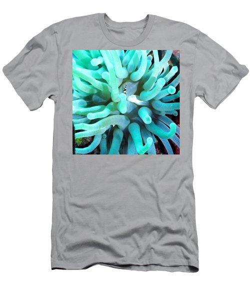 Sea Anemone And Squat Shrimp Men's T-Shirt (Athletic Fit)
