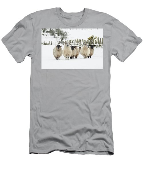 Sheep In Snow Men's T-Shirt (Athletic Fit)