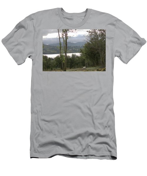 Sheep Near Lough Eske Men's T-Shirt (Athletic Fit)