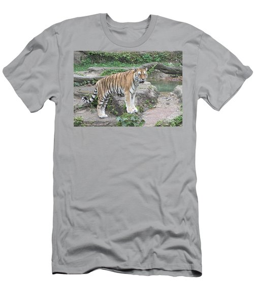 Siberian Tiger Men's T-Shirt (Athletic Fit)