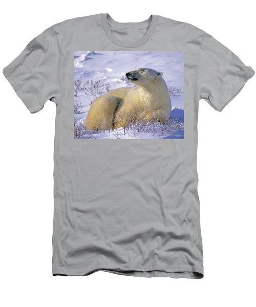 Sleepy Polar Bear Men's T-Shirt (Athletic Fit)