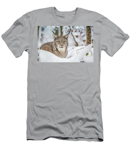 Snowy Lynx Men's T-Shirt (Athletic Fit)