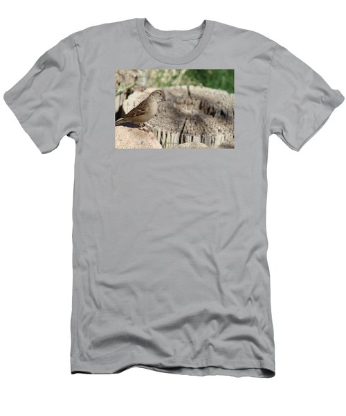 Song Sparrow Looks Curious Men's T-Shirt (Athletic Fit)