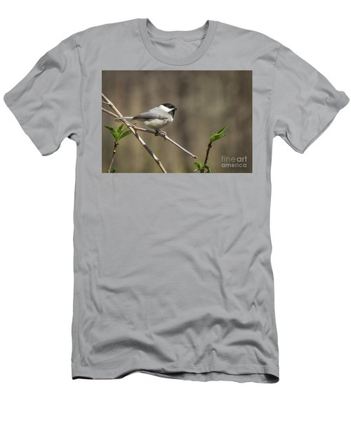 Springtime Chickadee Men's T-Shirt (Athletic Fit)