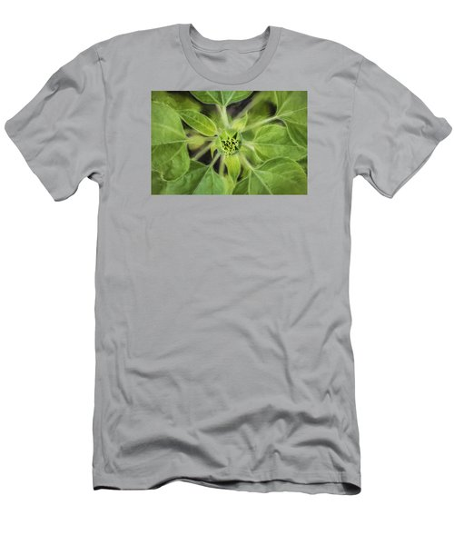 Sunflower Helianthus Giganteus Painted Men's T-Shirt (Slim Fit) by Rich Franco